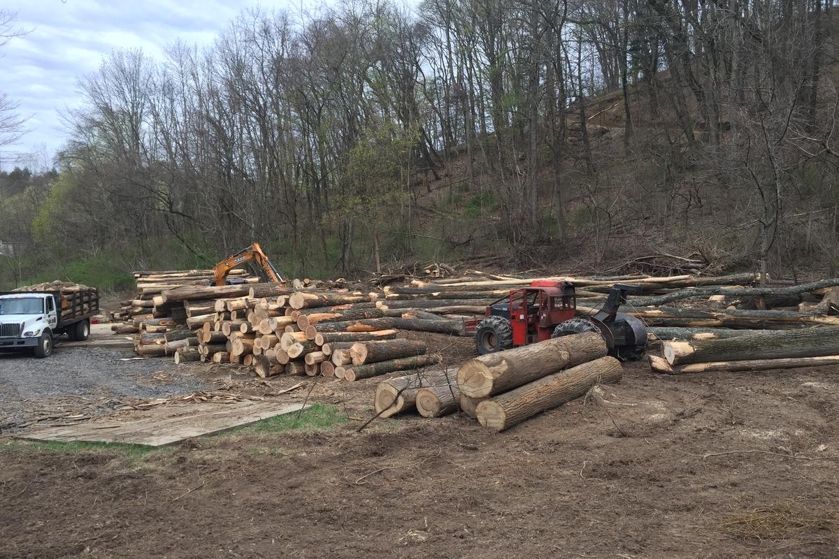 logging cover photo